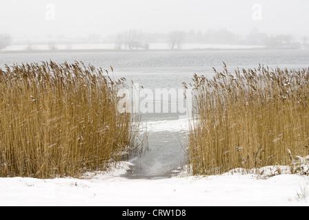 Winter landscape at the Schlei near Sieseby - Stock Photo