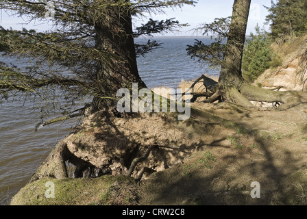 Uprooted tree on the beach - Stock Photo