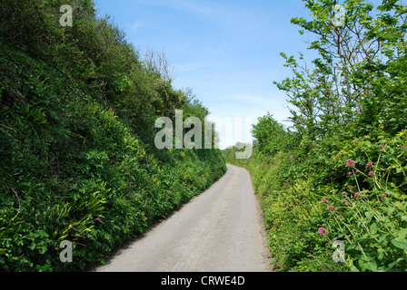 A quiet country road in Devon, England, UK - Stock Photo