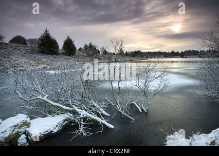 Partially submerged trees in a frozen and snow covered Fernworthy Reservoir, Dartmoor National Park, Devon, England. - Stock Photo