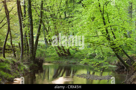 Blackwater river in the New Forest, Hampshire, England. Spring (May) 2012. - Stock Photo