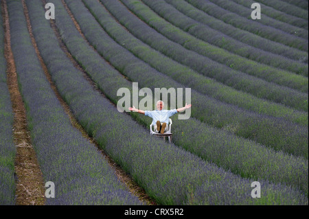 Andrew Elms in his lavender field at Lordington Farm near Chichester West Sussex UK - Stock Photo