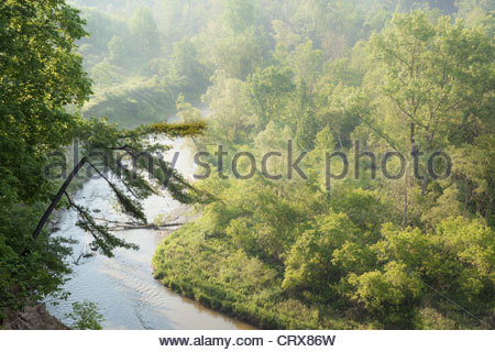 Windblown pine hanging over the Rouge River in Rouge National Urban Park an urban wilderness in Toronto Ontario - Stock Photo