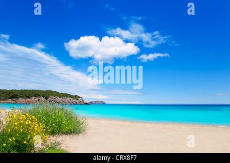 Cala Nova beach in Ibiza island with turquoise water in Balearic Mediterranean - Stock Photo
