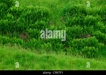 Velvet Bottom, a nature reserve in the Mendip Hills Somerset UK - Stock Photo