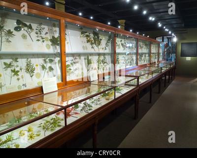 Harvard Museum of Natural History Boston MA - Stock Photo
