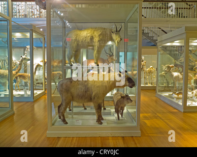 Harvard Museum of Natural History in Boston MA - Stock Photo