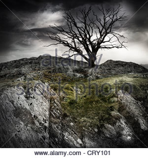 lonely old tree - Stock Photo