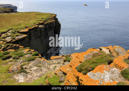 View of dramatic seacliffs with colony of seabirds nesting on ledges at Noup Head Westray Island Orkney Islands - Stock Photo
