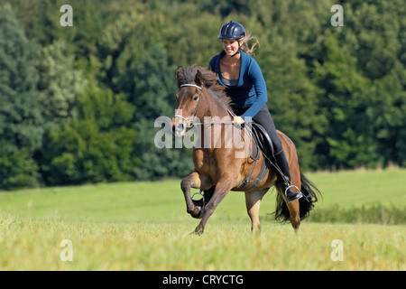 Young woman rider galloping on an Icelandic horse over a stubble field - Stock Photo