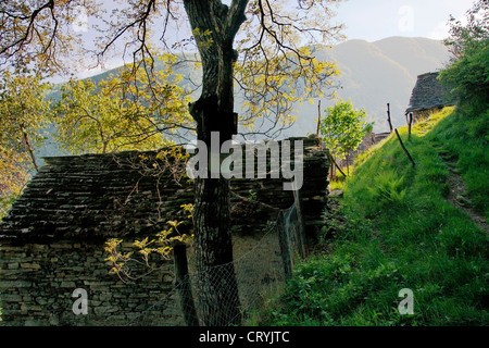 stone hutches (near village of mergoscia) - canton of ticino - switzerland - Stock Photo