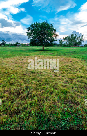 Trees and grass in the countryside. A beautiful environment. - Stock Photo