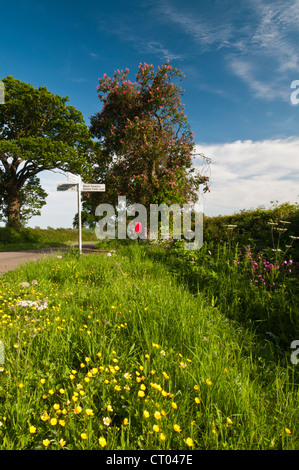 A grass verge and hedgerow full of wild flowers in early summer beside a narrow country lane in Northamptonshire, - Stock Photo