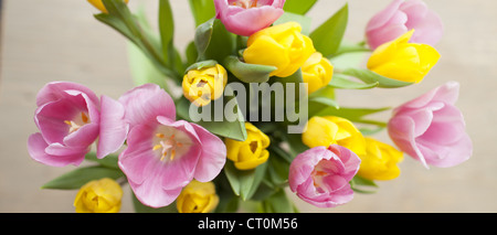 Arrangement display of tulips, Tulipa, in springtime in the Cotswolds, Oxfordshire, UK - Stock Photo