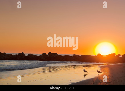 Silhouette of rocks on beach at sunset - Stock Photo