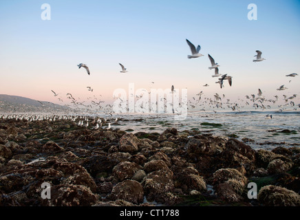 Seagulls flying over rocky beach - Stock Photo