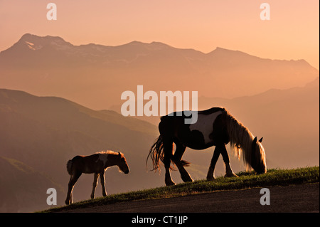 Free roaming horse with foal at sunset on the Col d'Aubisque in the Pyrénées-Atlantiques, Pyrenees, France - Stock Photo