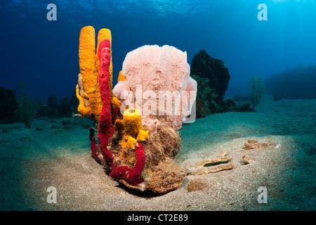 Caribbean Coral Reef, Caribbean Sea, Dominica - Stock Photo