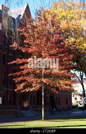 Fall foliage before a freshman dorm building in Harvard Yard, the old heart of Harvard University campus in Cambridge, - Stock Photo