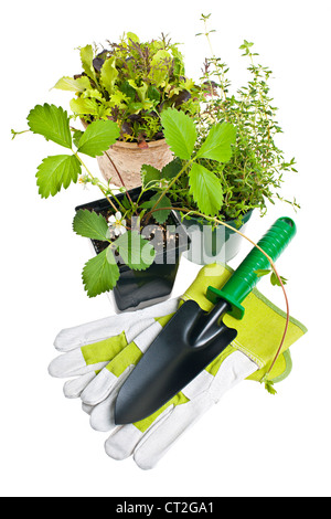 Plants and seedlings in pots with gardening tools isolated on white - Stock Photo