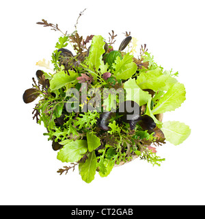 Potted seedlings of garden lettuce and salad greens from above - Stock Photo