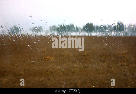 Rainy day, raindrops running down a wind. View of a muddy field, trees in rain. - Stock Photo