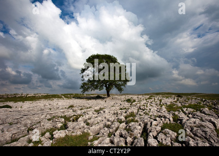 Mallam Pavement _Limestone pavement rock formations above Malham Cove, Malhamdale, North Yorkshire Dales, UK - Stock Photo