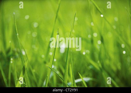 Grass close up at ground level with water droplets on the green blades. - Stock Photo
