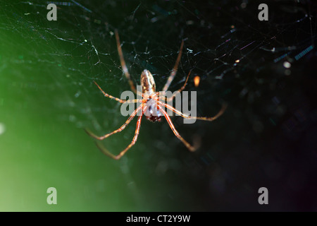 red spider on green background - Stock Photo