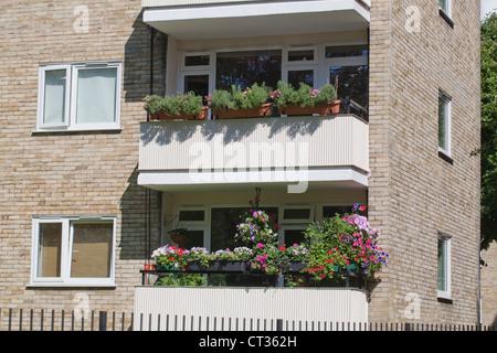 Apartments, flats, London. Colourful planted window boxes on adjacent balconies. Stoke Newington. - Stock Photo