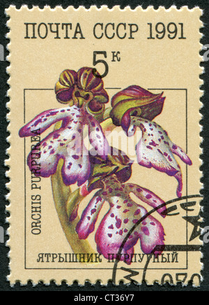 USSR-CIRCA 1991: A stamp printed in the USSR, shows Orchis (Orchis purpurea), circa 1991 - Stock Photo