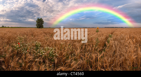Panorama of a big summer field on morning with clouds in the sky on background - Stock Photo