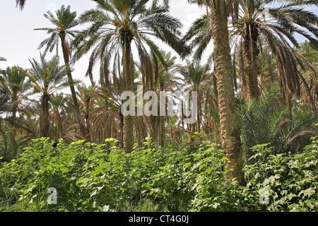PALM GROVE - Stock Photo