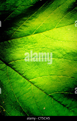 Green leaf background macro texture with space for text or image. - Stock Photo