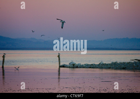sunset at Salton Sea California with mass fish die off - Stock Photo