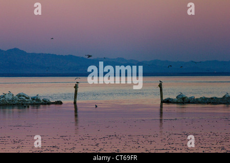 Sunset with mass fish die off at Salton Sea - Stock Photo