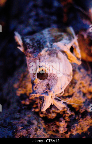 dead fish at Salton Sea - Stock Photo