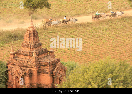 Ox-carts on a dusty road, Bagan Archaeological Zone, Mandalay region, Myanmar, Southeast Asia - Stock Photo
