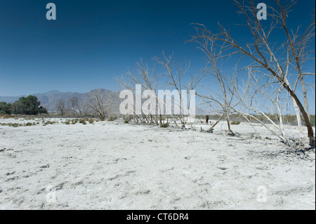 Line of trees with mountains in the background, Salton Sea Beach, Southern California, USA. - Stock Photo