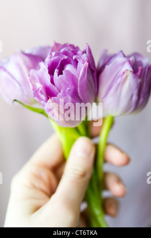 Women's hand holding small bouquet of three purple tulips against the light blurring background. Shallow DOF - Stock Photo