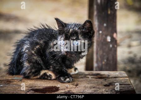 A blue eyes cat - Stock Photo