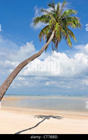 Palm tree on deserted Natien Beach, Koh Samui, Thailand - Stock Photo