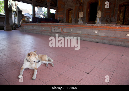 A feral dog relaxing in the shade of a temple. Ubud, Bali, Indonesia - Stock Photo