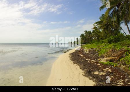 Caribbean Beach in Ambergris Caye, Belize - Stock Photo