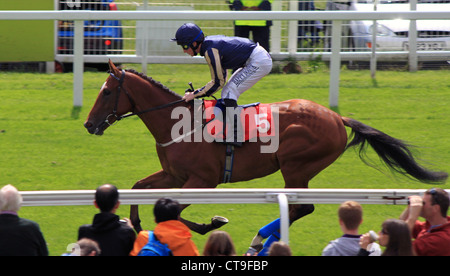 A Racehorse Makes it way to the Start - Stock Photo