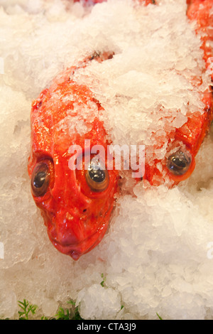 Red Snapper  fish on ice - Stock Photo