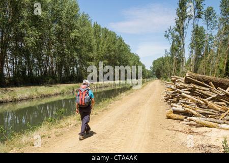 Female hiker on canal footpath. Canal de Castilla, Palencia,province, Castilla-Leon, Spain. - Stock Photo