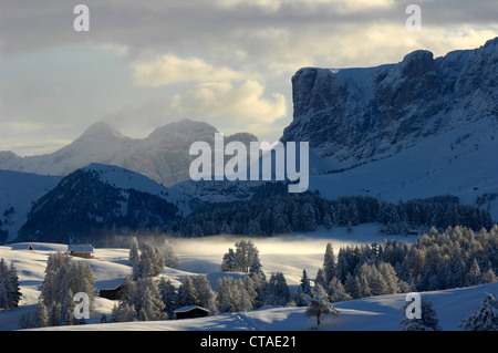 Valley in the morning fog, Seiser Alm, Dolomites, South Tyrol, Trentino-Alto Adige, Italy - Stock Photo