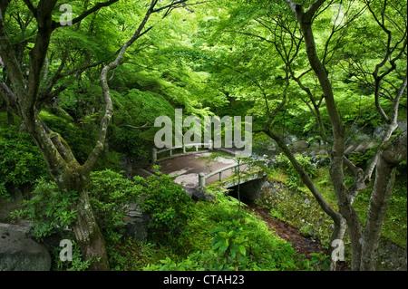 Tofuku-ji, Kyoto, Japan. Japanese maples (acer palmatum) in summer - Stock Photo
