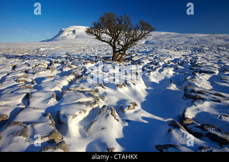 A winter view of Ingleborough seen from the snow covered limestone pavement at White Scars - Stock Photo